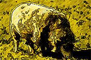 Κινέζικο Ωροσκόπιο - Πρόβατο