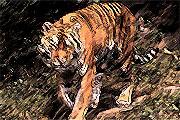 Κινέζικο Ωροσκόπιο - Τίγρης