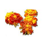 Κινέζικη Αστρολογία και Πολύτιμα Λουλούδια - Σκύλος, Ταγέτης